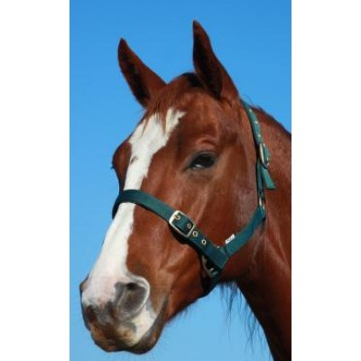 Headstall Padded Warmblood