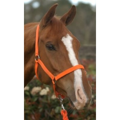 Headstall Nylon COB