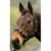 Headstall Nylon Suede Ebony Black