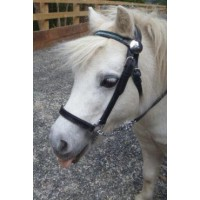 In-Hand Lead-In Bridle - Jewelled MINI